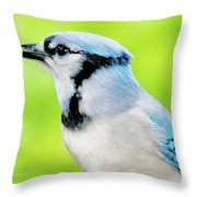 Blue Jay, Animal Portrait Throw Pillow