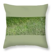 2008 Crab Grass Mead Throw Pillow