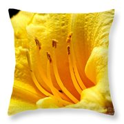 2008 Daylily Throw Pillow