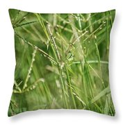 2008 Grasshopper In Green 'can You See Me...' Throw Pillow