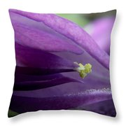 2010 Wisteria Blossom Up Close 20 Throw Pillow
