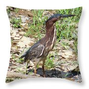 2014-baby Green Heron Throw Pillow