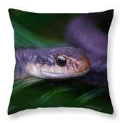 2015 03 29 02 _4054 Throw Pillow
