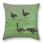 2016-canadian Geese And Babies Throw Pillow