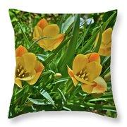 2016 Early May Meadow Garden Bright Gem Batalin Tulip Throw Pillow
