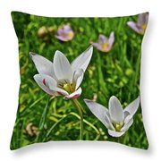 2016 Early May Meadow Garden Lady Jane Tulip Throw Pillow