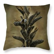 2016 Horicon Marsh - Seed Pods Unfurled Throw Pillow