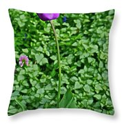 2016 Mid May  Exotic Purple Tulip Throw Pillow