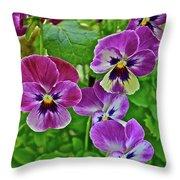 2016 Mid May Pansies 1 Throw Pillow