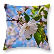 2016 Olbrich Cherry Blossoms 2 Throw Pillow