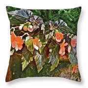 2017 Early August At The Gardens Visiting An Old Friend Throw Pillow