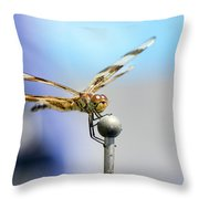 2017 Eclipse Dragonfly Throw Pillow