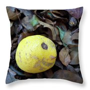 2017 Limone Throw Pillow
