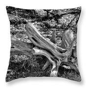 201702250-005k Cedar Stumps 2x3 Throw Pillow