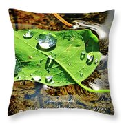 2018 08 31 Sign H2o Leaf Img_6008 Throw Pillow