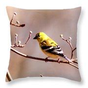 2164 - Goldfinch Throw Pillow