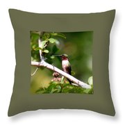 2274 - Hummingbird Throw Pillow