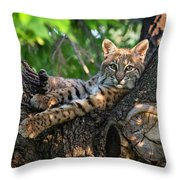 In A Lurch - Bobcat 8 Throw Pillow