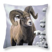 25084, Bighorn Sheep, Winter, Jasper Throw Pillow