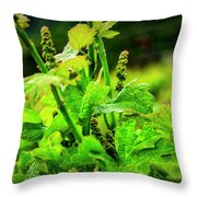2629- Comsrock Winery Throw Pillow