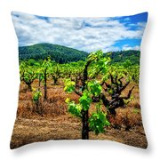 2638- Coffaro Vineyard Throw Pillow