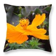 Australia - Yellow Cosmos Carpet Flower Throw Pillow