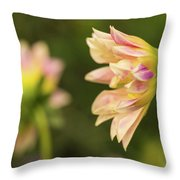 Closeup Of A Colourful Flower Throw Pillow