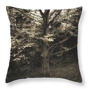 Fine Art Throw Pillow