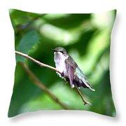 2757 -  Hummingbird Throw Pillow