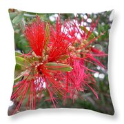 Australia - Red Flower Of The Callistemon Throw Pillow