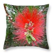 Australia - Callistemon Red Flower Throw Pillow