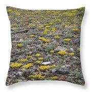 2d07512 Prairie Zinnia In Lost River Range Throw Pillow