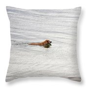 3 - Golden Lab Lovin Life Throw Pillow
