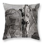 18th Century Anatomical Engraving Throw Pillow