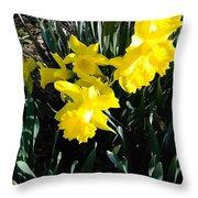 A Daffodil Exhibit Throw Pillow
