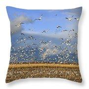 A Panoramic Of Thousands Of Migrating Throw Pillow