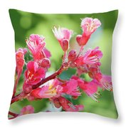 Aesculus X Carnea, Or Red Horse-chestnut Flower Throw Pillow