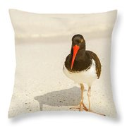 American Oystercatcher, Haematopus Palliatus,  Looking For Food  Throw Pillow