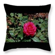 Beautiful Rose Throw Pillow