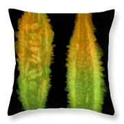 Bitter Melon Fruit, X-ray Throw Pillow
