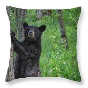 Black Bear Yearling Throw Pillow