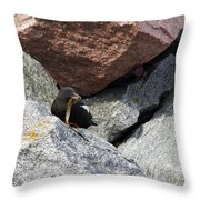 Black Guillemot Throw Pillow