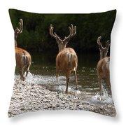 3 Bucks Throw Pillow