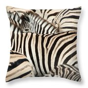 Burchells Zebras Equus Quagga Throw Pillow