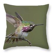 Calliope Hummingbird Throw Pillow