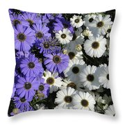 Cineraria Throw Pillow