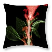 Cockscombs Flower, X-ray Throw Pillow