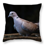 Collared Dove Throw Pillow