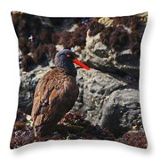 Black Oystercatcher Throw Pillow