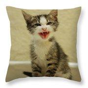 3 Day Old Kitten Throw Pillow